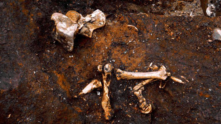 Bones, Hjalmarvık midden